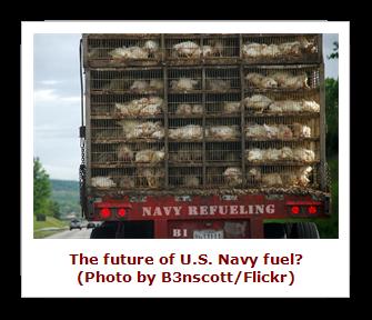 Navy Fuel